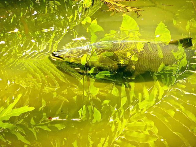 Поймать рыбу во сне на удочку
