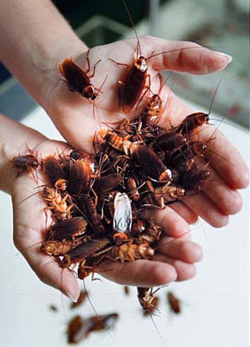 Беременный таракан во сне 92