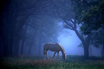 Сонник во сне видела лошадей