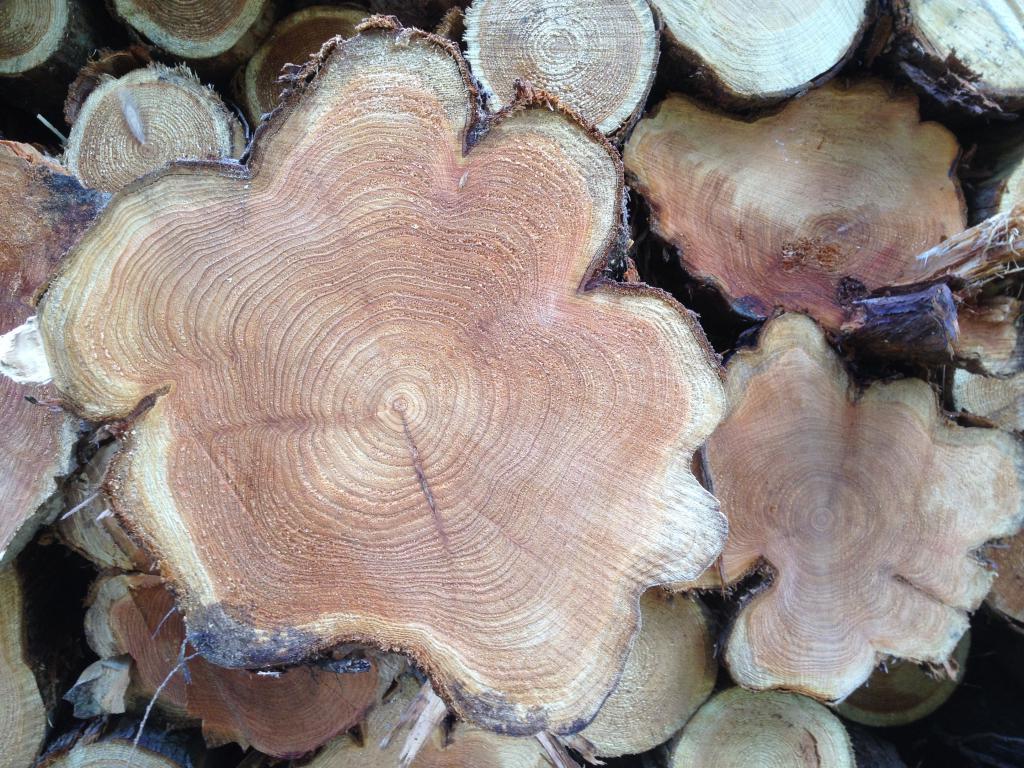 sawed pine