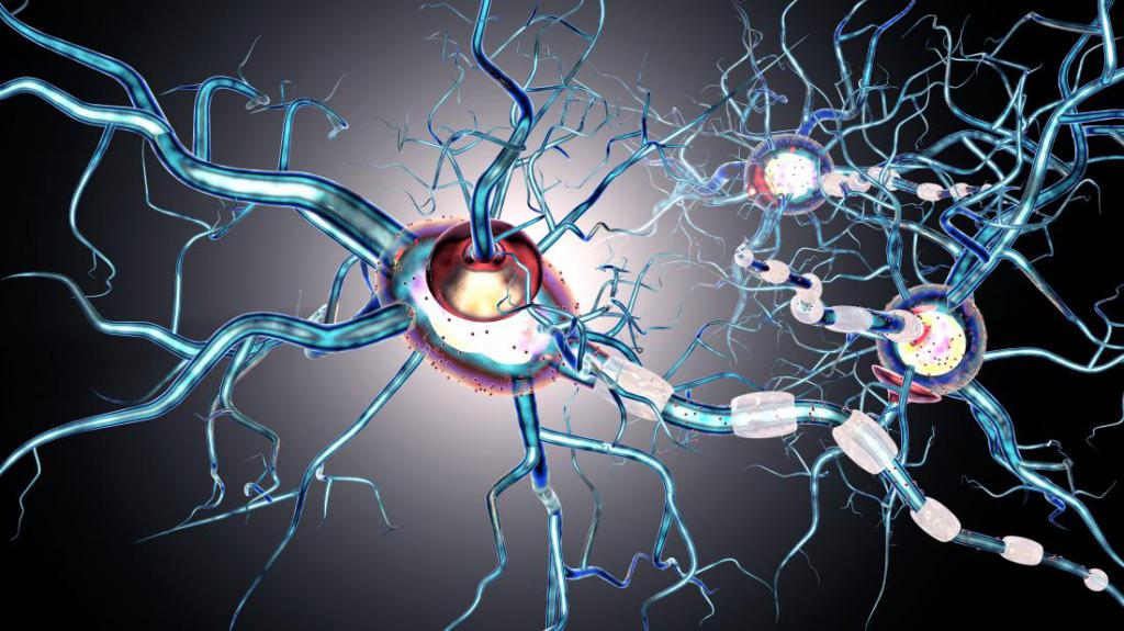 multiple sclerosis informative outline Multiple sclerosis (ms) is a nervous system disease that affects your brain and spinal cord it damages the myelin sheath, the material that surrounds and protects your nerve cells this damage slows down or blocks messages between your brain and your body, leading to the symptoms of ms.