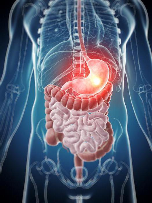 пищеварительная система функции органов пищеварения