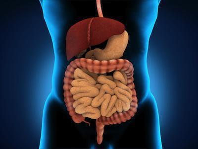 названия органов пищеварительной системы