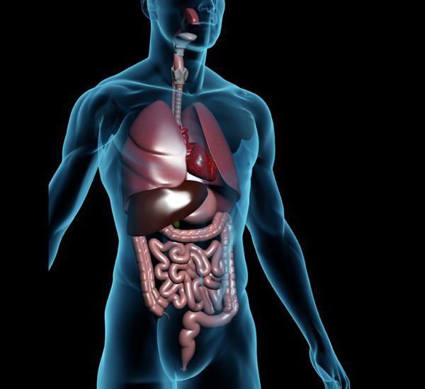 последовательность прохождения пищи по органам пищеварительной системы