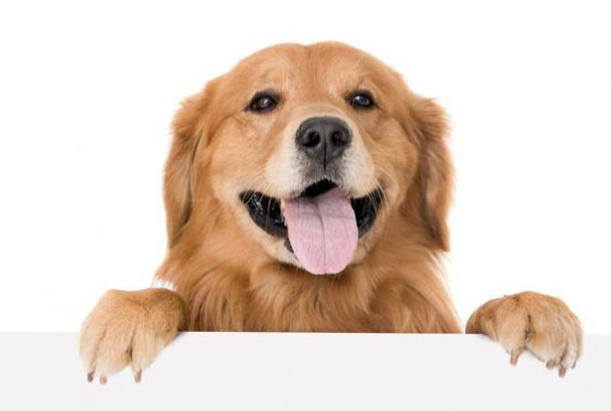 Корм для собак баркинг