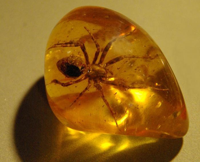 Янтарь камень фото 27 фотография