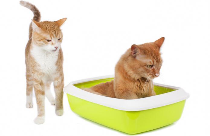 Стоп цистит для кошек