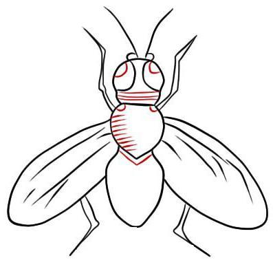 как нарисовать муху цокотуху поэтапно