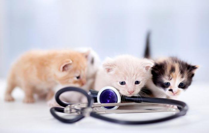 когда котятам делают первую прививку