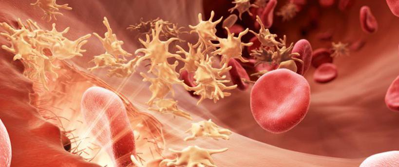 Нарушение свертываемости крови: причины, диагностика, методы лечения, реабилитация