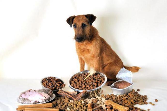 собака отказывается от еды что делать