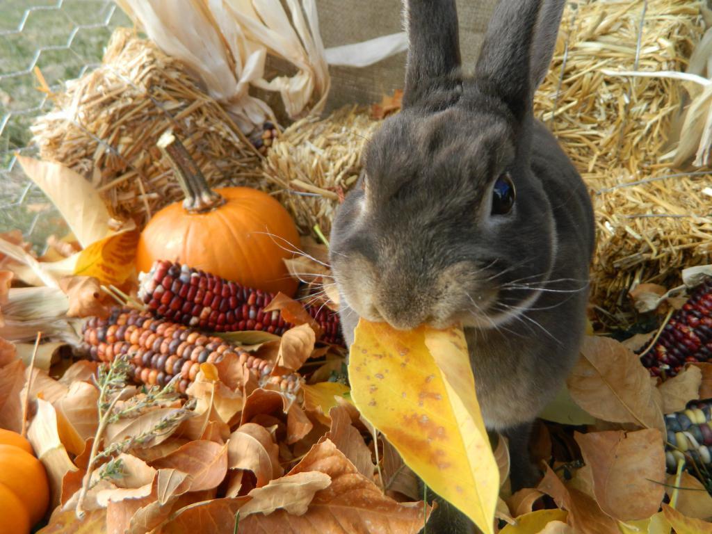 Кролик ест листья