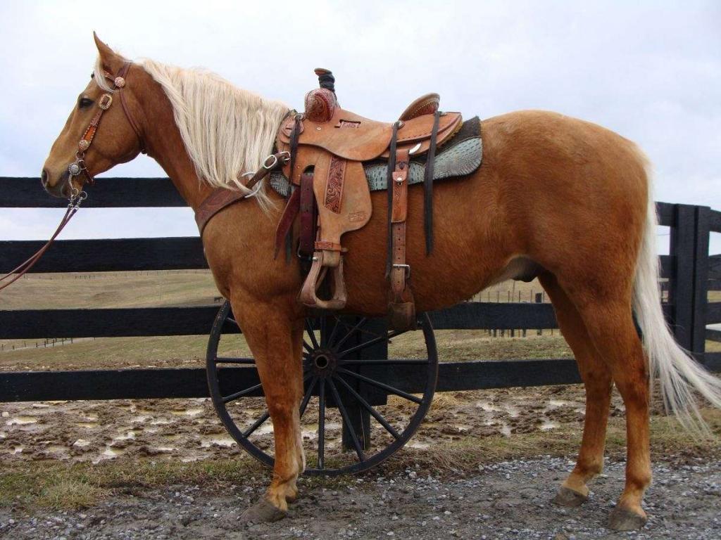 Каурая лошадь в упряжке
