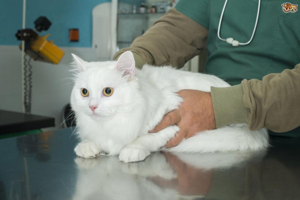 кот у врача