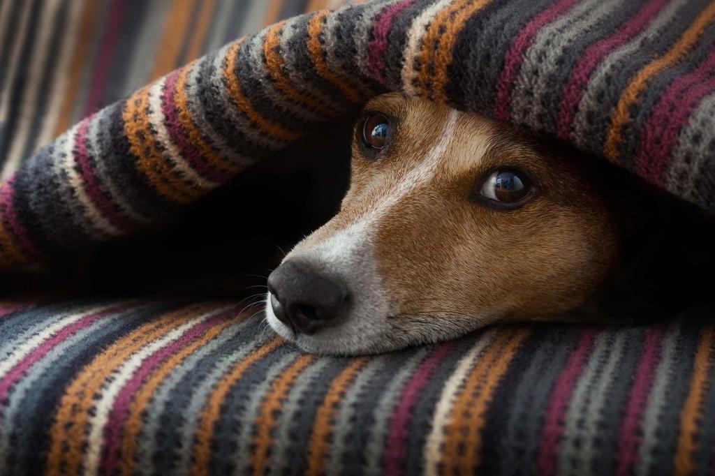 Сколько длится течка у собак средних пород: длительность и периодичность