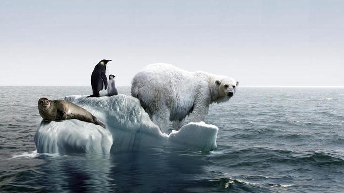 проблема глобального потепления