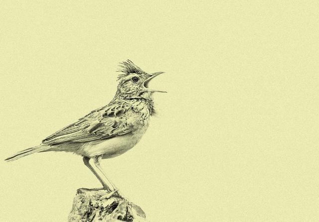 Отличие жаворонка и совы секс