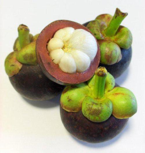 сироп мангустин производитель