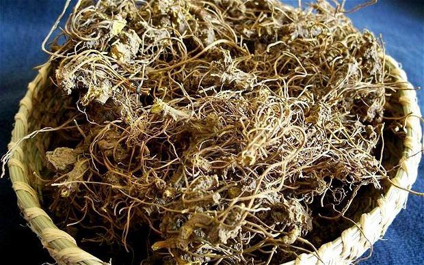 Как приготовить золотой корень и как его применять для улучшения потенции