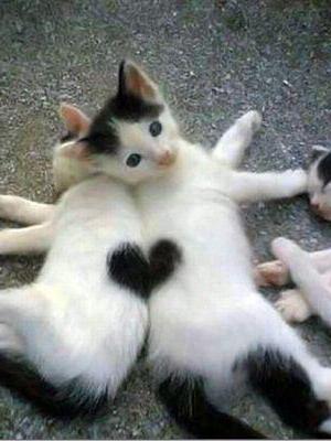 знакомство кошек друг с другом
