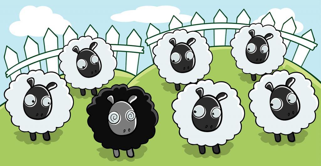 black ram among white
