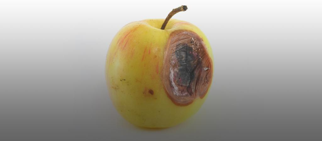 картинка гнилое яблоко внутри всех остальных