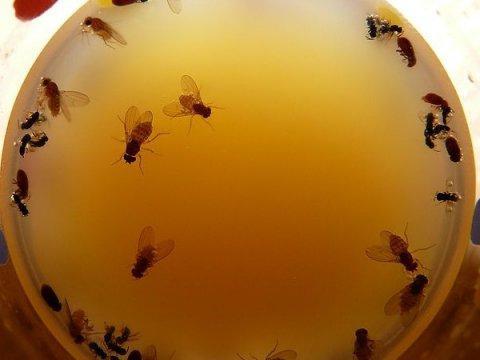 новые средства паразитов в организме