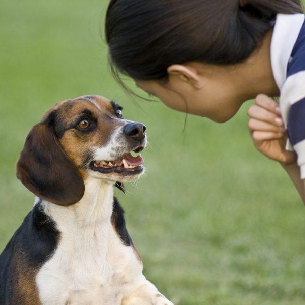 Как отучить собаку лаять в квартире - способы, советы и рекомендации