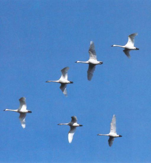 картинки улетают птицы в теплые края