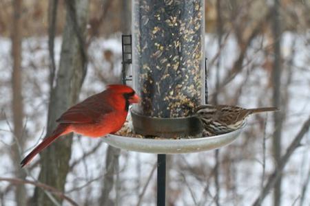 чем кормить уличных птиц зимой