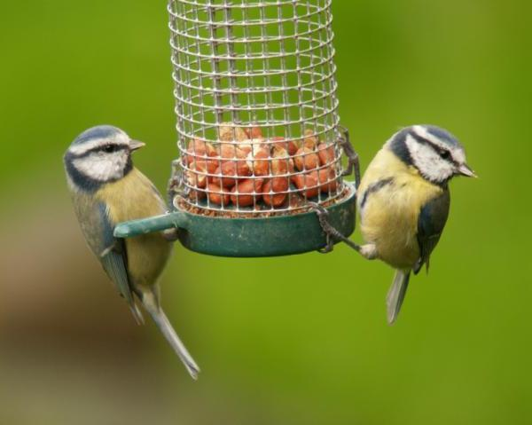 зачем кормить птиц зимой