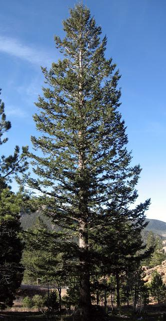 Планеты в настоящее время это дерево