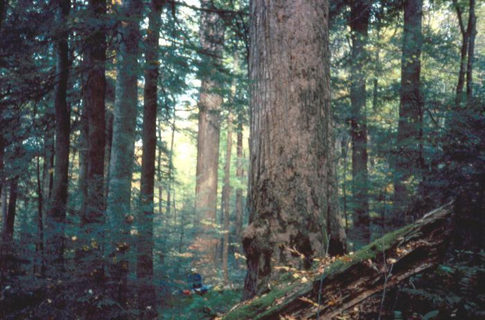 климат смешанных и широколиственных лесов