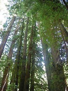 тайга смешанные и широколиственные леса