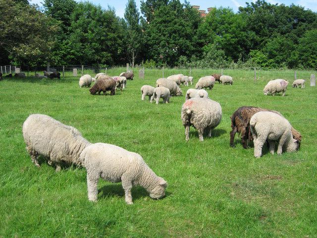 овцеводство бизнес план
