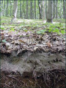 серые лесные почвы характеристика