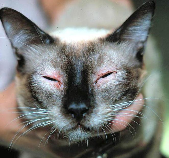 антигистаминные препараты для кошек от аллергии
