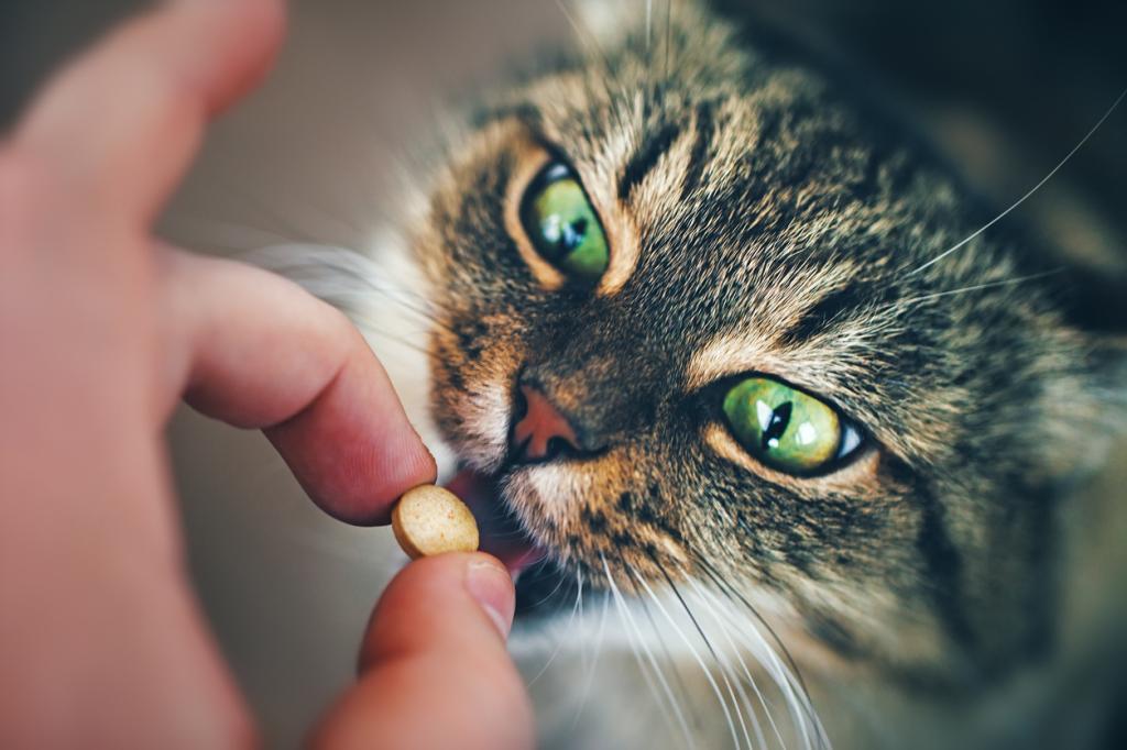 Кошка принимает таблетку