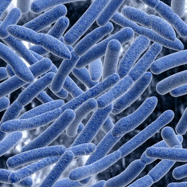 Бактерия гарднерелла