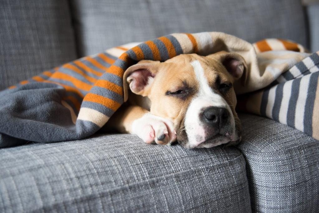 Понос у собаки: причины и лечение в домашних условиях быстро