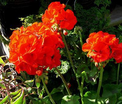 Цветы по фен-шуй как средство привлечения богатства