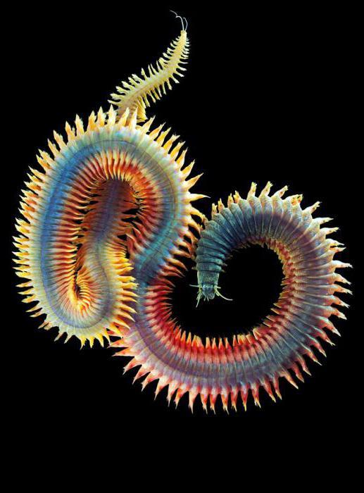 общая характеристика круглых и кольчатых червей