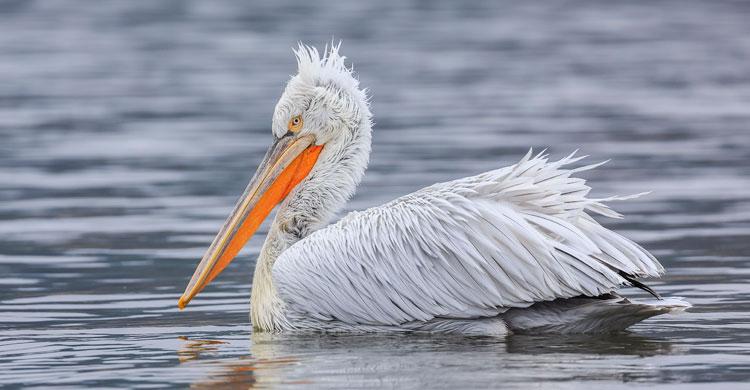 Птицы Южного Урала: описание, названия и фото, описание, характеристики, среда обитания и особенности видов
