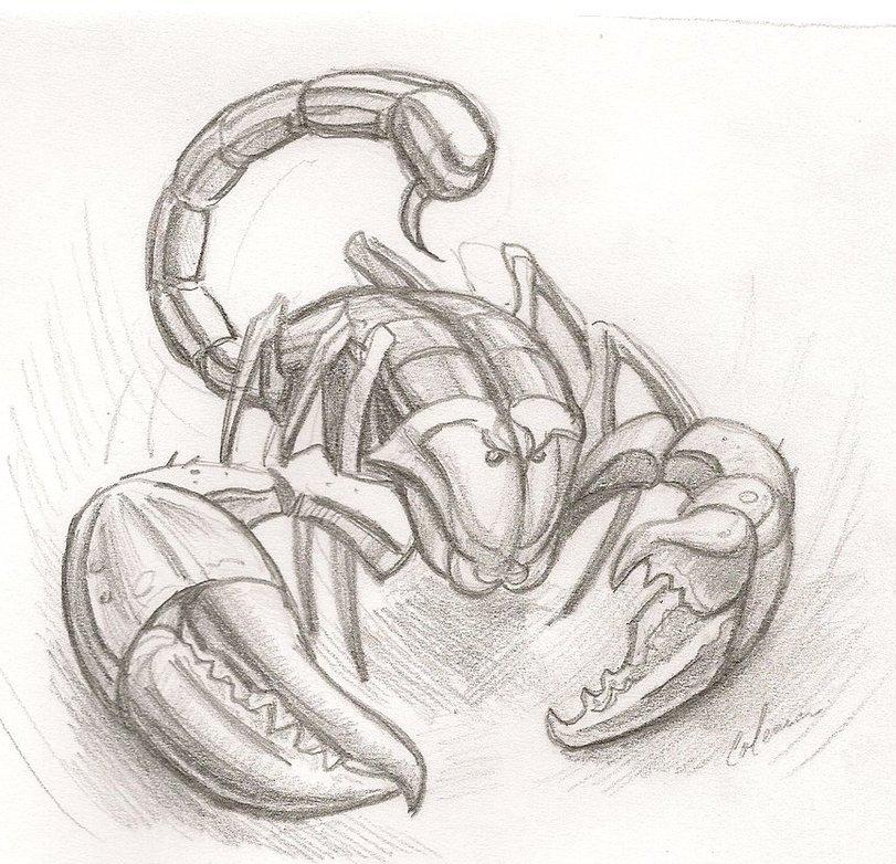 Картинки скорпиона карандашом