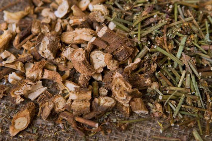 Чем полезен цикорий растворимый для организма человека?