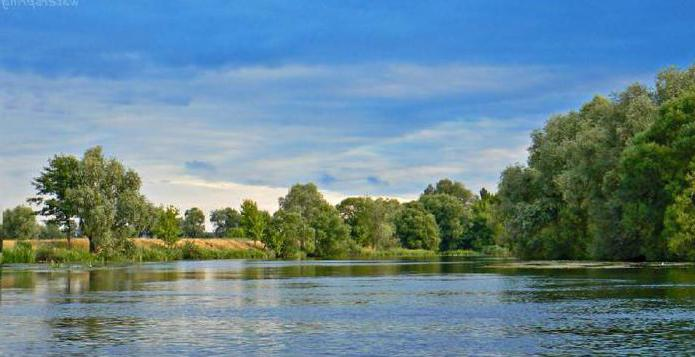 куда впадает река Сейм Курской области