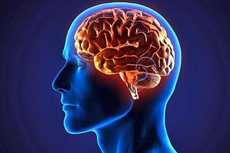 The brain needs to gain new knowledge