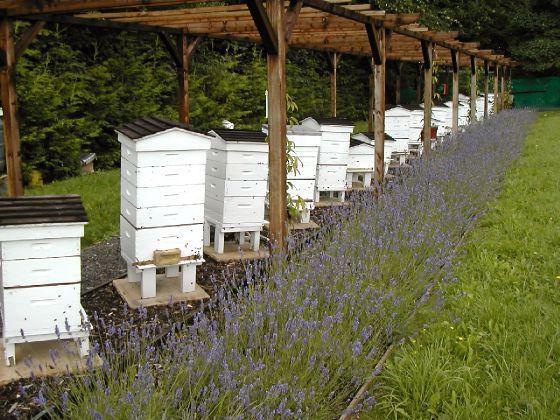 шмелиный мед как добыть