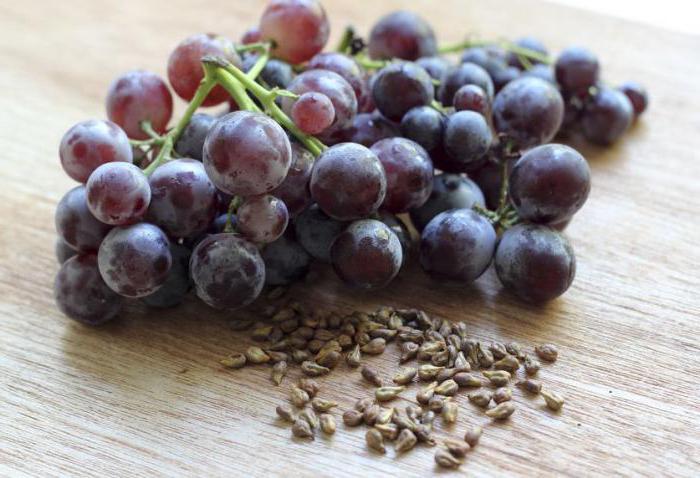 когда обрабатывать виноград гиббереллином