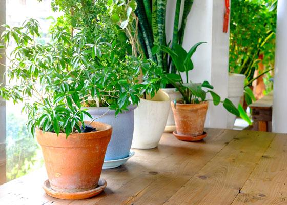 Белые жучки в почве комнатных растений: причины появления, методы борьбы